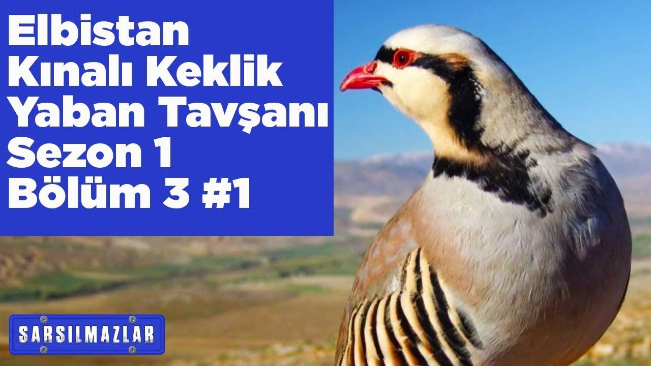 Elbistan Kızılkandil Kınalı Keklik ve Yaban Tavşanı Avı Sarsılmazlar 1.Sezon 3.Bölüm 1 Yaban Tv