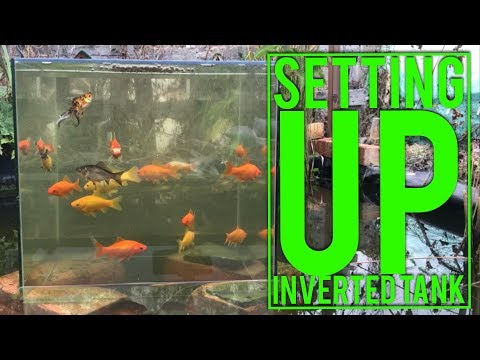 INVERTED Fish Tank In Pond Tutorial, Cheap Set-up And Very Easy To Do. Fish Viewing Tower