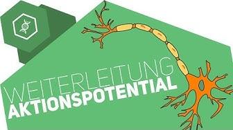 Weiterleitung des Aktionspotentials ● Gehe auf SIMPLECLUB.DE/GO & werde #EinserSchüler