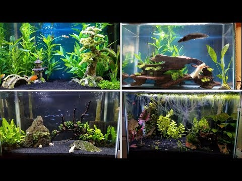 4 Easy Tank Setups For A 20 Gallon Aquarium Youtube