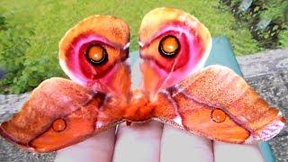 No es una Mariposa
