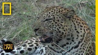 Safari Live - Day 322   National Geographic