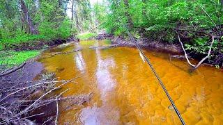 Лесная микро-речка, ротанье болото и сказочная лесная река! Ловля щуки и ротана на спиннинг!