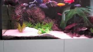 Ein Aquarium entsteht. 1000 Liter Malawisee