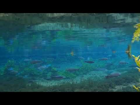 Underwater Footage From Bigwell Fly Fisheries Gin Pool Rainbow Trout.