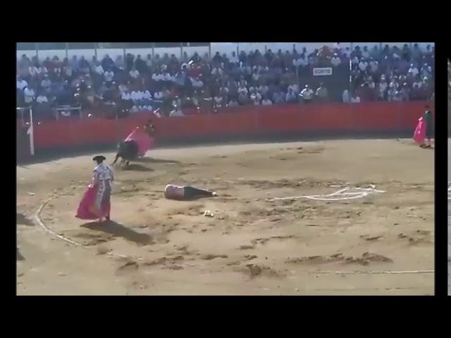 Un antitaurino es volteado al irrumpir en la plaza de toros de Carcassonne