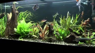 75g planted tank progression maintenace tip