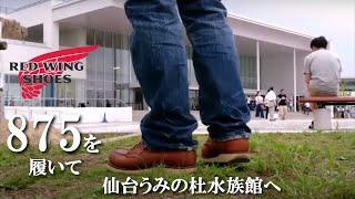 レッドウイング アイリッシュセッター 875 を履いて 仙台うみの杜水族館...