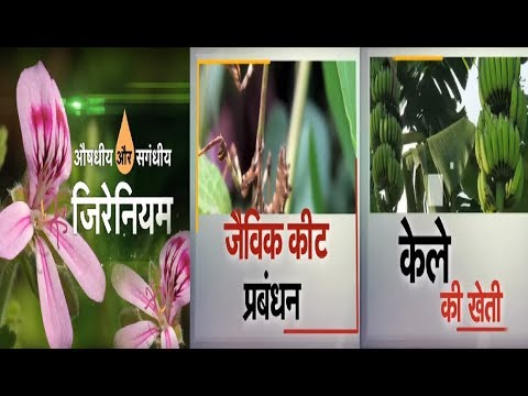 Krishi Darshan - Geranium, Organic Pest Management and Banana Farming
