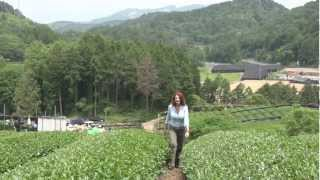 Matcha: The Way of Tea .... -On location in Japan