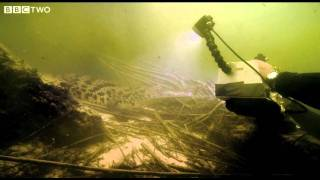 Underwater Encounter with the Nile Crocodile - Swimming with Crocodiles - Episode 1 - BBC Two