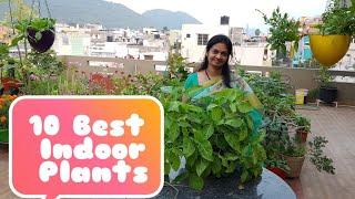 10 Best Indoor Plants  for decorating  your homes.ఇంటి అందాన్ని  పెంచె 10 ఇండోర్  మొక్కలు.
