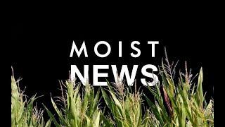 MOIST NEWS // A plantação de milho do tio Kelly