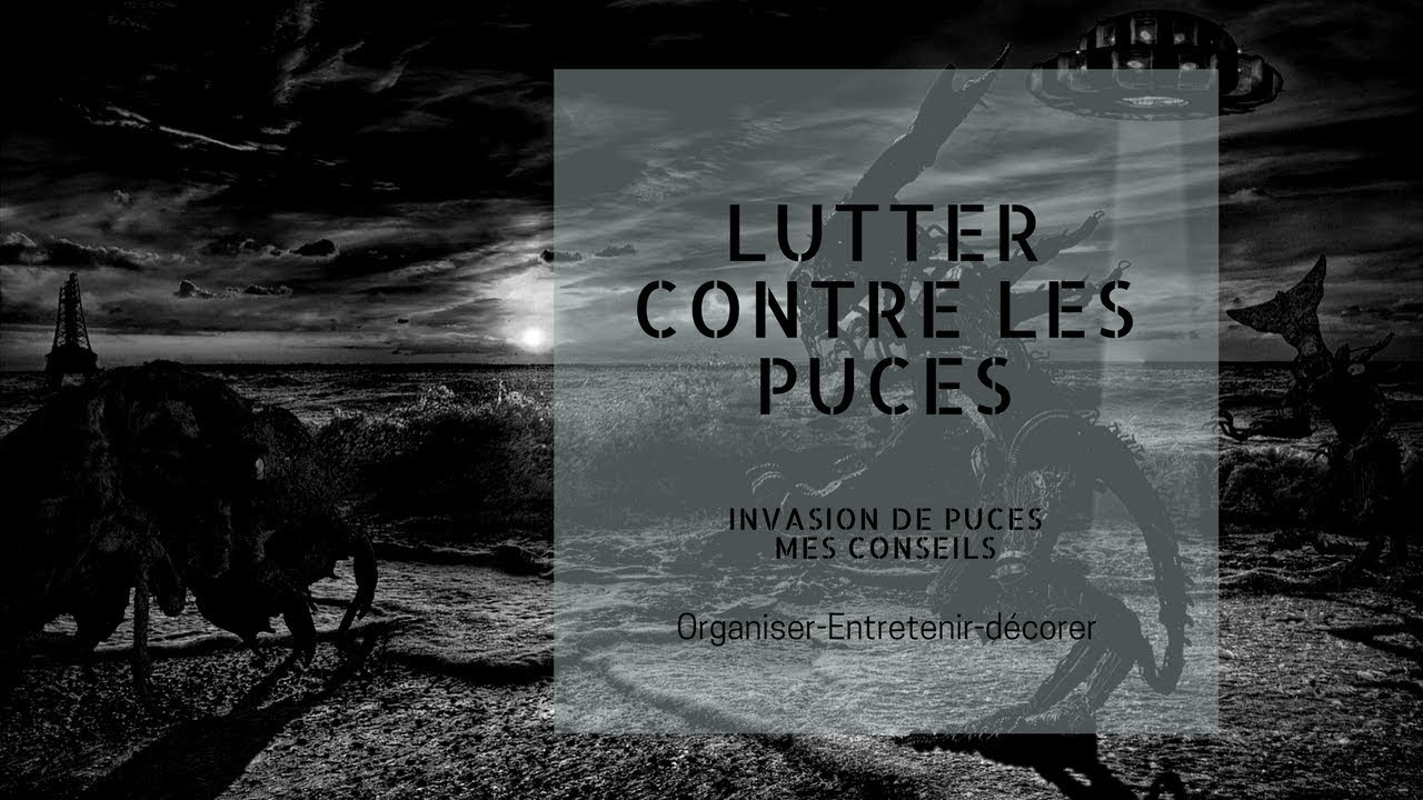lutter contre les puces mes 11 conseils youtube. Black Bedroom Furniture Sets. Home Design Ideas