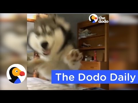 Most Fearless Blind & Deaf Cat | Animal Videos You Need to See Today | The Dodo Daily Ep. 7