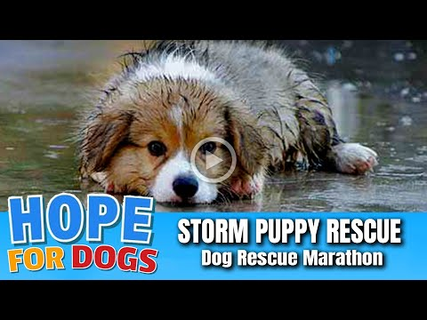 Hope Rescues Puppy Soaking Wet After Storm