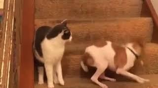 Кот сломал собаку смотреть онлайн   Юмор   hlamer ru   Красвью