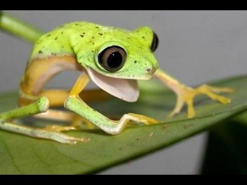 симулятор лягушки скачать торрент - фото 5