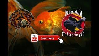 Fotos de acuarios y peces de miembros de los grupos de facebook
