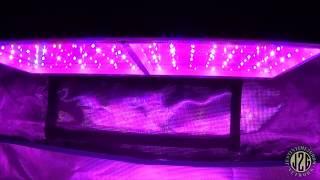 Mars Hydro Eco 600 LED Unboxing & PAR testovanie