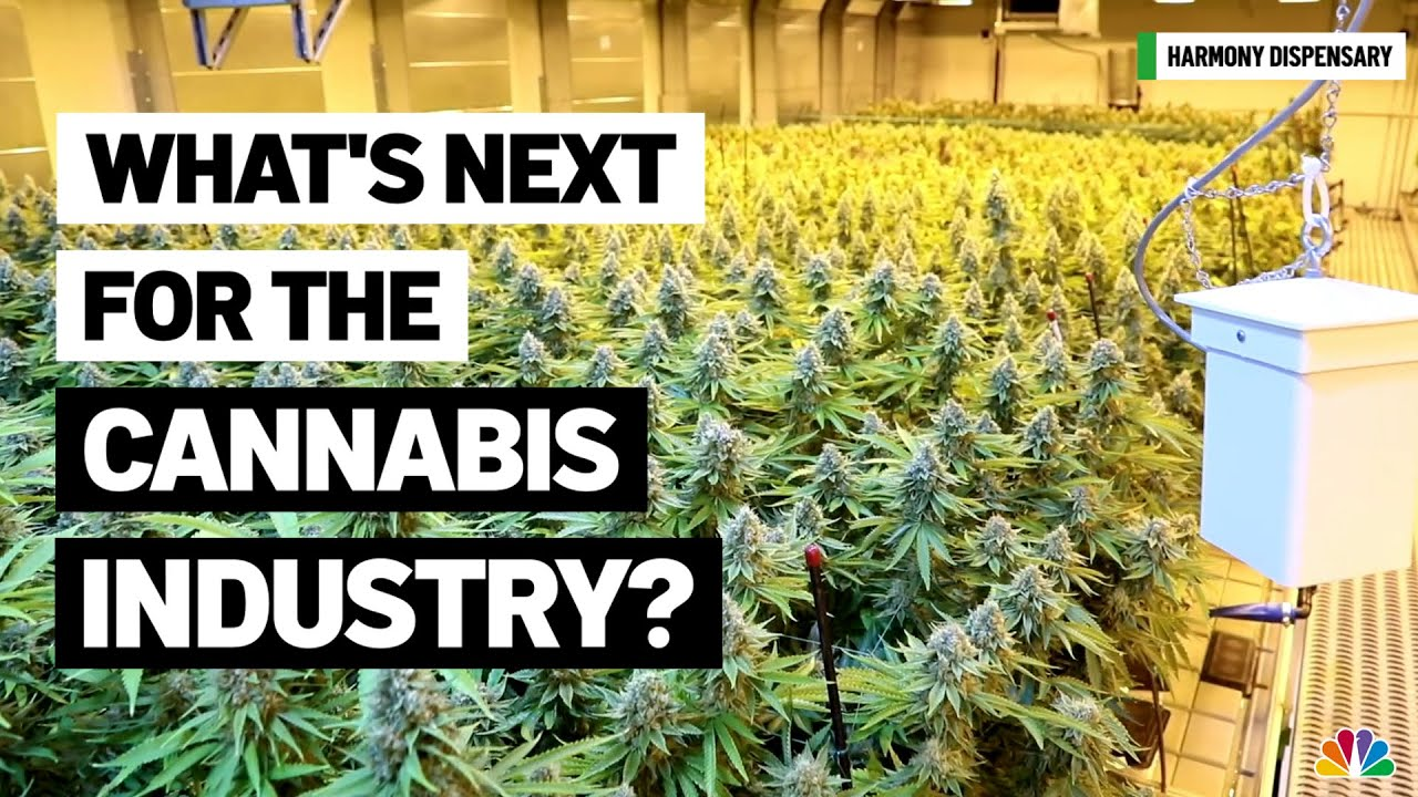 New Jersey Weed Vendors Get Ready for Expansion | NBC New York
