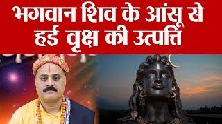 Tears of Shiva, Story Of Rudraksh : कैसे हुई भगवान् शिव के आंसू से वर्षा की उत्पत्ति | Boldsky