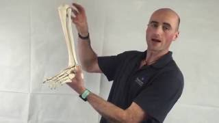 FSM Video Series - An Exercise for Ankle Mobility by Ross Kinsella, Sports Physiotherapist