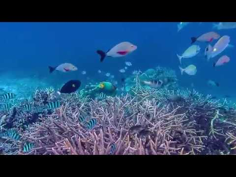 Oceanic plastic trash conveys disease to coral reefs