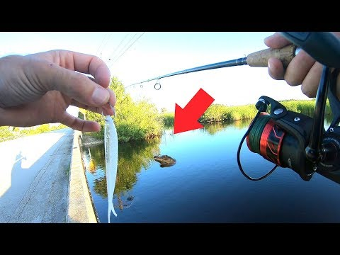 Everglades Roadside Canal Fishing For Exotic Fish