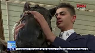 NIK o hodowli koni