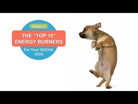Dog Training: Top 10 Games Dogs Love to Play