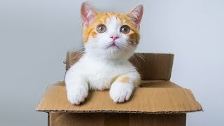 领养短腿小橘猫开箱,腿只有手指长,吃的却比大猫还多!