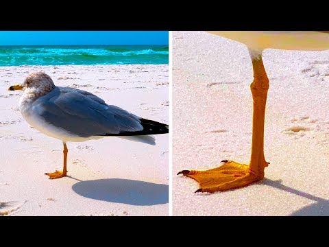 Warum stehen Vögel auf einem Bein und die 30 meist gegoogelten Warum-Fragen