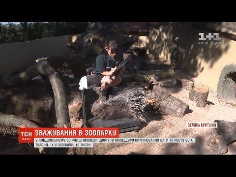 ТСН: У лондонському зоопарку провели щорічне зважування усіх тварин