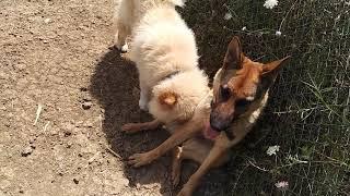 Yabancı Bir Köpeğe Nasıl Yaklaşılır 8