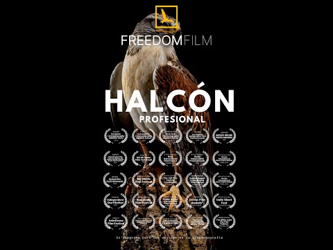 Halcón - Programa de cinematografía profesional