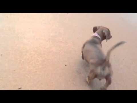 Lola bites the sea
