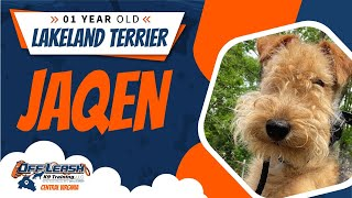 1yo Lakeland Terrier (Jaqen)  Best Dog Trainers in FXBG