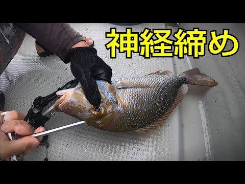 魚の活け締め→血抜き→神経締め。釣った魚を美味しく保存する手順