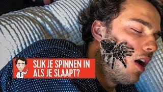 kruipen spinnen in je mond als je slaapt? joost mag het weten