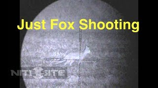 Just Fox Shooting With The Tikka T3 Super Varmint In .223.