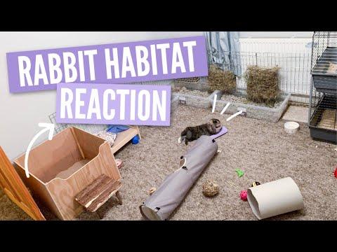 Reacting To My Subscribers Rabbit Habitats