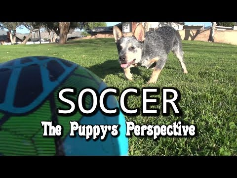 Soccer - Puppy Perspective