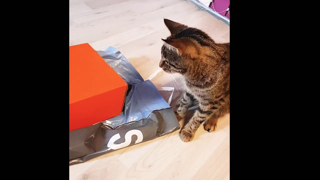 my cat fights against the Nike shoe box