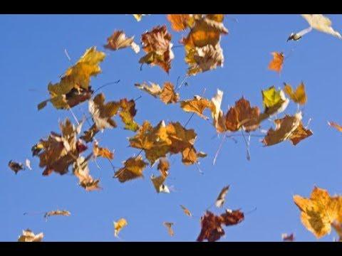 Die  Blätter  fallen   -   Gedicht & Musik