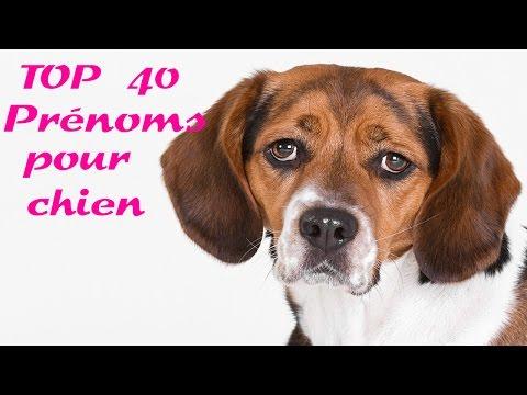 Top 40 Prénoms Pour Chien