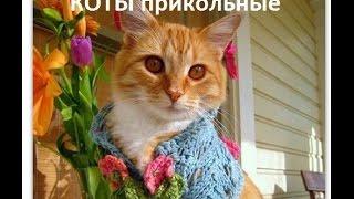 Коты прикольные! октябрь 2014года. Смешные и очаровательные!