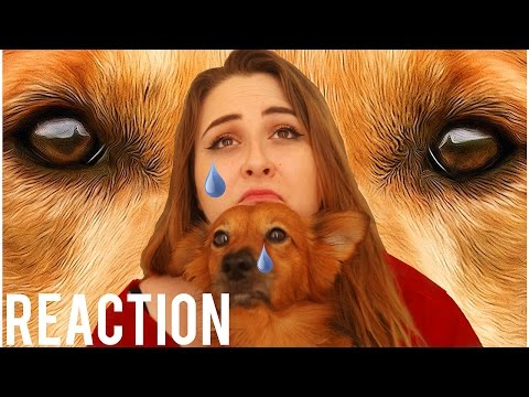 A Dog's Purpose - Official Trailer -REACTION!!
