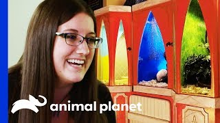Kristen Wants A Truly Magical Enclosure For Her Three Snakes | Scaled