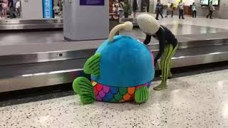 Video Baggage claim at the Honolulu Airport download MP3, 3GP, MP4, WEBM, AVI, FLV Agustus 2018